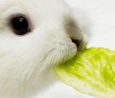 世界上最美的七十个英文单词(音画) - 玉兔王子 - bilixiang的博客